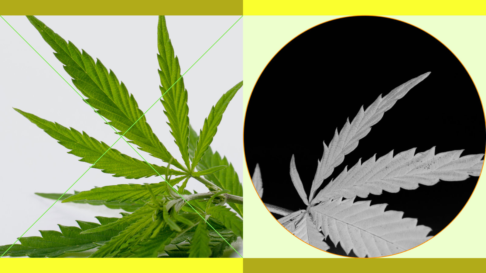 Why Cbd Acts as Useful Alternative for Different Ailments